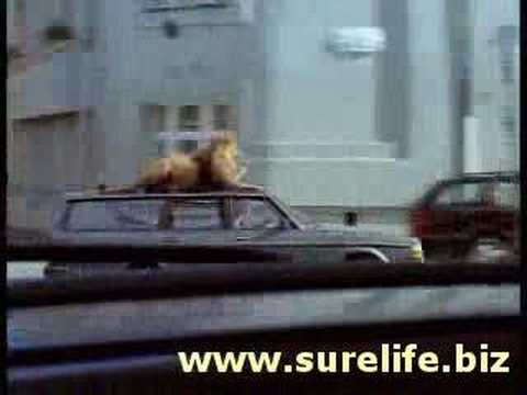 Funny Life Insurance Video @ www.surelife.biz